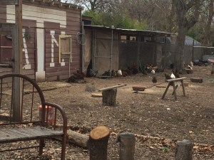 The chicken coop. I could stand there and watch them for hours.