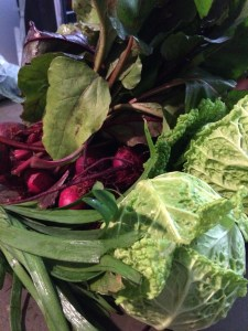 My haul from Springdale Farm: Beets, Savoy Cabbage, Garlic Chives