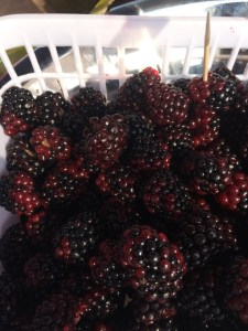 Some of the best blackberries I've ever eaten. Picked just the day before.