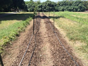 The rows we cleaned, amended, and compsoted.