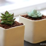 Small Pots With Succulents Mini Cake Tutorial Tarttokig