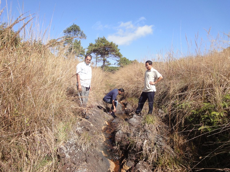 Sacred Grove in Meghalaya (4/6)