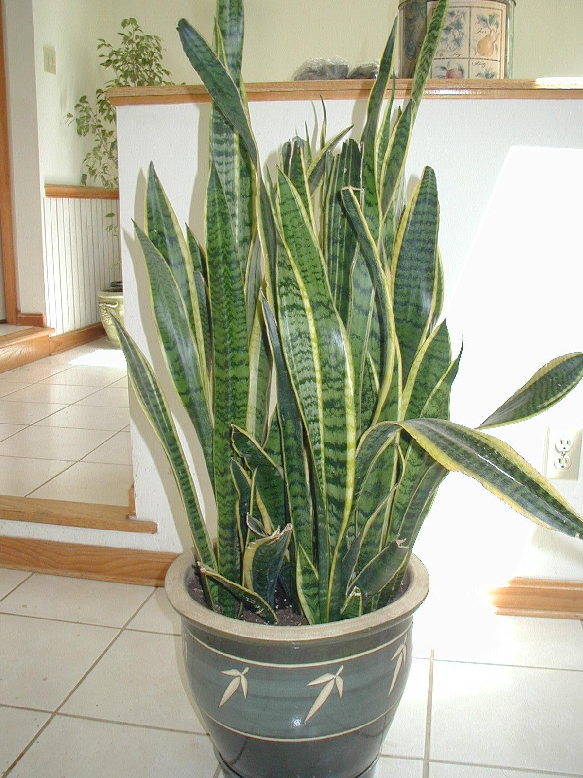 Plants That Improves Indoor Air Quality Taskican