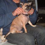 Dog massage, ωφέλιμο για την υγεία του σκύλου σας!