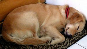 7 στάση ύπνου σκύλου