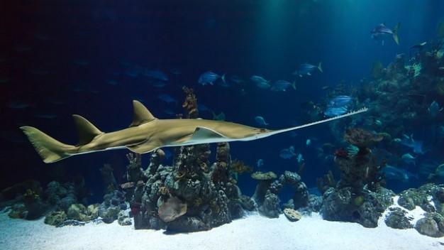 Nuatan, un bioplastique que même les poissons peuvent manger