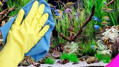 تنظيف حوض الأسماك بطرق سهلة وبسيطة