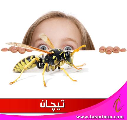 مكافحة الحشرات بالمنزل وإبادتها بشكل تام.. وأفضل طرق ممكن تجربيها