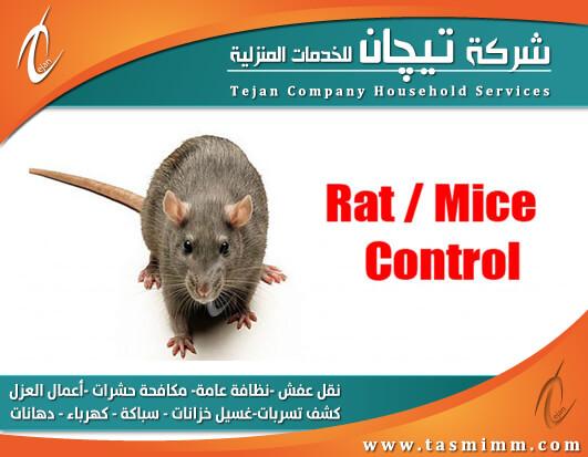 شركة مكافحة الفئران بالمدينة المنورة بأكثر من طريقة والقضاء عليها في الحال