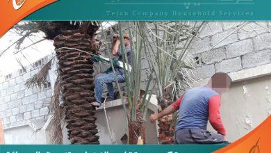 شركة تكريب النخيل بالرياض تقدم خدماتها في تنظيف وتلقيح مزارع النخيل بالرياض وتقليم النخيل