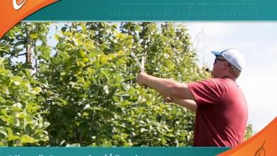 عامل قص الاشجار بالرياض يسهل عليكم تجميل وتقليم الاشجار بالرياض بخبرة ومهارة واقل سعر