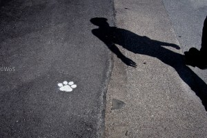 Paws and Footprints