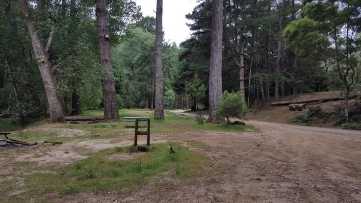 oldina-forest-reserve
