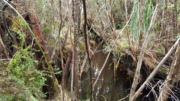 suprise-creek-1