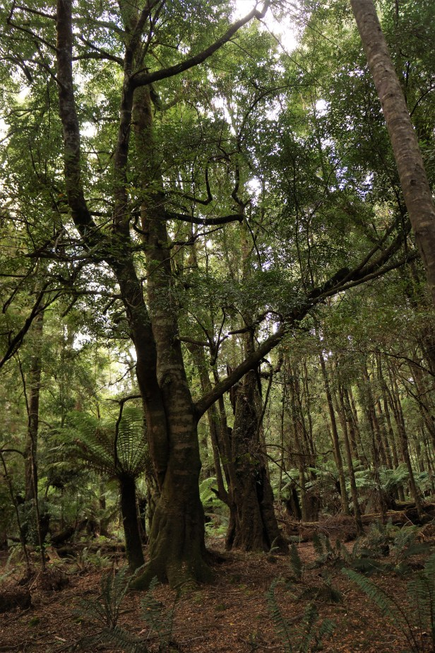 Dancing Trees.JPG