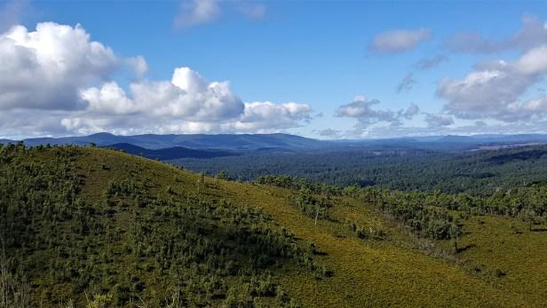Millicent Valley 1