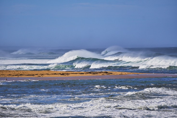 Wild Seas