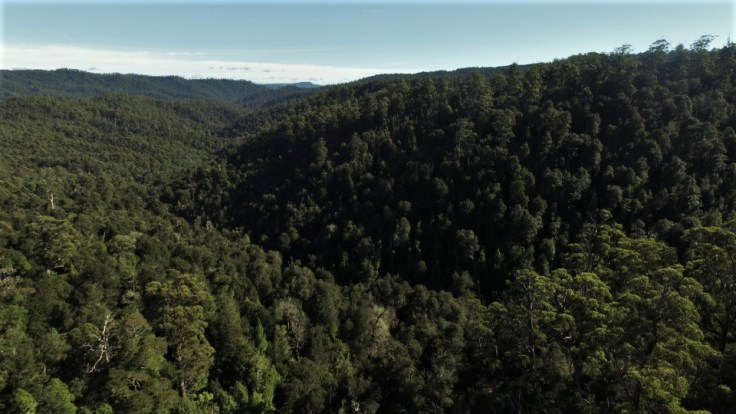 Campbell Rivulet Valley