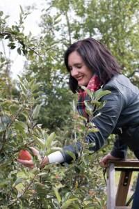Apple Picking - Mountain Orchards | Taste & Tipple