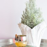 The Drunken Pear | Taste and Tipple