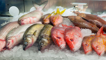 assortment-of-fresh-fish-on-ice-in-a-market-350