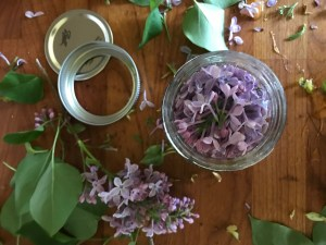 Jars of lilacs