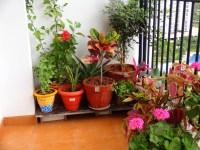 My balcony garden | tastediary