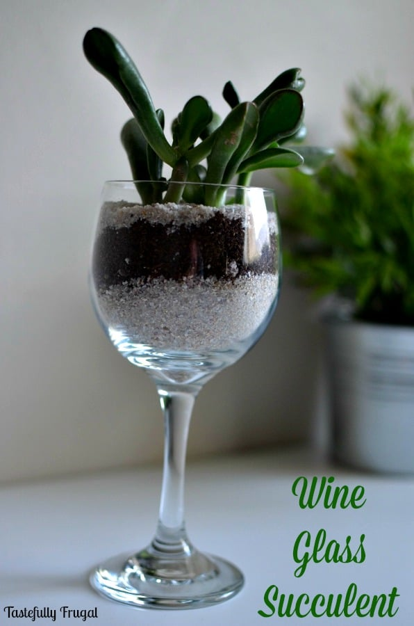 Wine Glass Succulents: The Perfect Plants for The Black Thumb