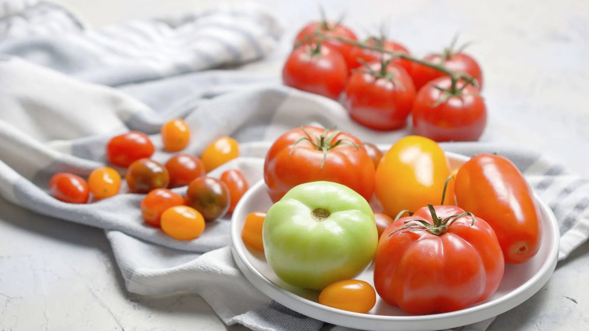 All you need to know about tomatoes