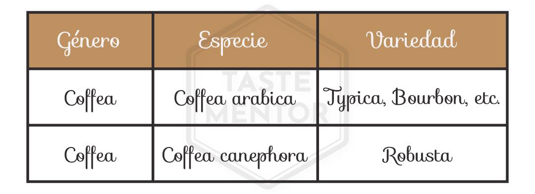Taste Mentor - café arabica robusta variedades