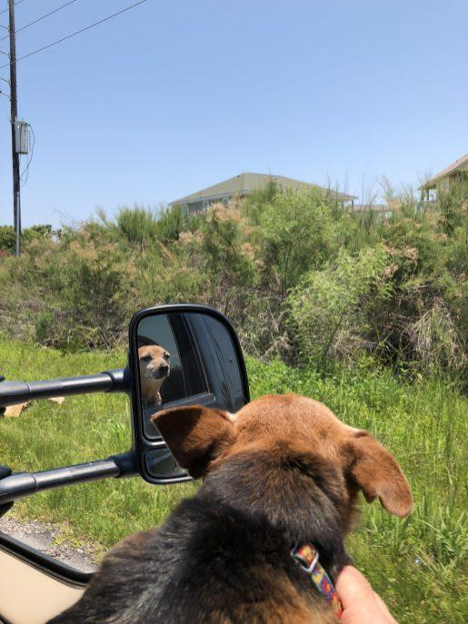Our dog, Stitch, enjoying the gulf air.