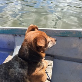 Stitch loved to go wherever we went, even on water.