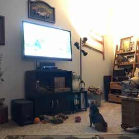 Stitch loved to watch TV. If we paused it during something he was watching, he would bark at us until we turned it back on.