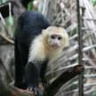 Manuel Antonio National Park, Costa Rica 2009© Credit: Krystal M. Hauserman @MsTravelicious