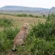 Maasai Mara, Kenya 2010 © Credit: Krystal M. Hauserman @MsTravelicious