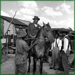 Sofasonke, owner of race horses, and regularly enters the offices of the Council mounted on Brown Sugar