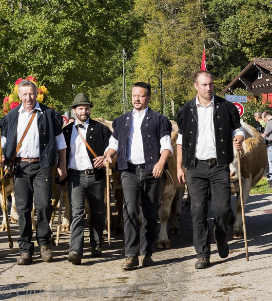 The proud herdsmen leading their herd