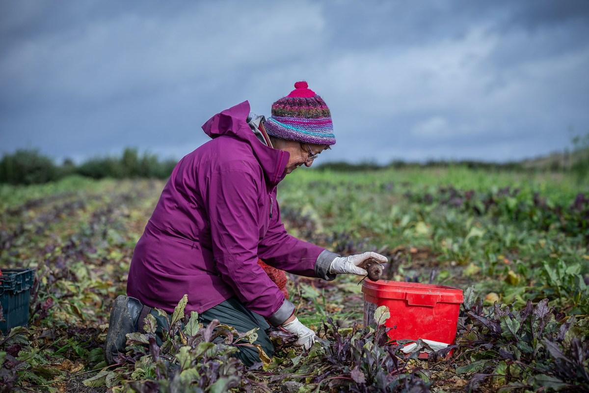 Newfield Organics © Polly Baldwin