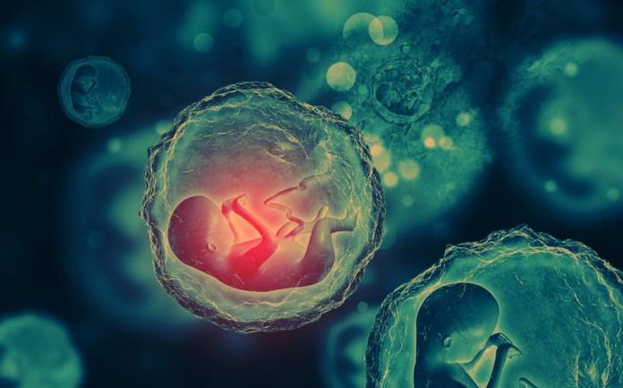 prvi genetski modifikovani ljudi