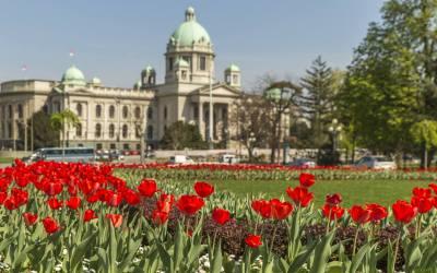 Blooming Belgrade