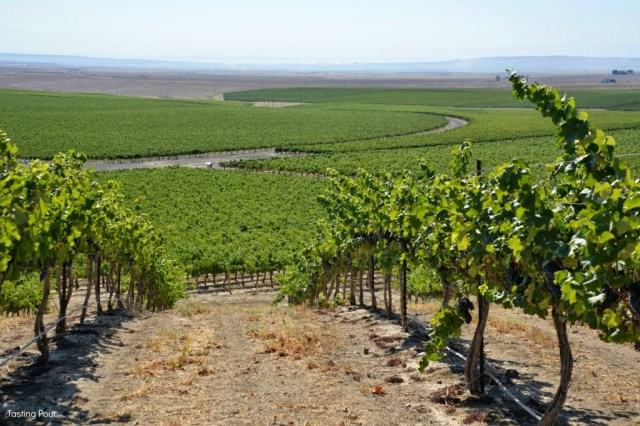 Coyote Canyon Vineyard in Horse Heaven Hills Washington State Wine