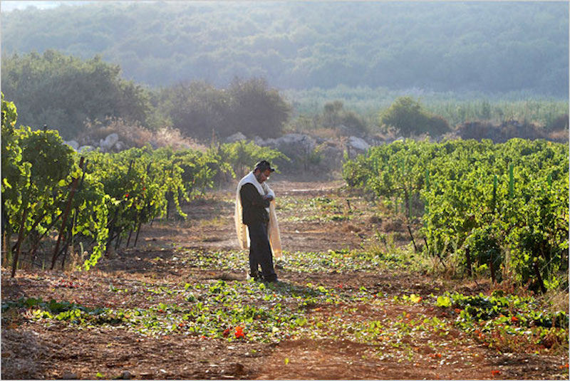 Israeli Wines include a Taste of History