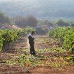 Israeli Wines include a Taste of History