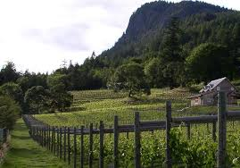 Island Wineries