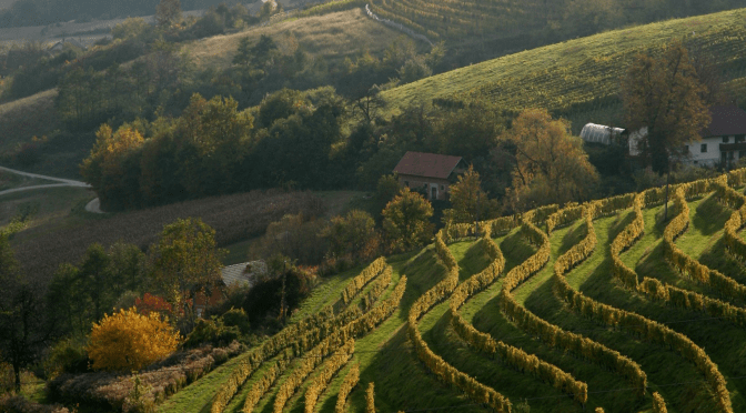 Grossmann Film and Wine Festival – Ljutomer, Eastern Slovenia