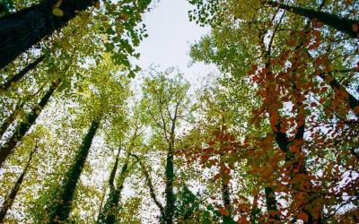 Trees and Planetary Health: Tree Planting needs to be underpinned by behavioural change and political support.