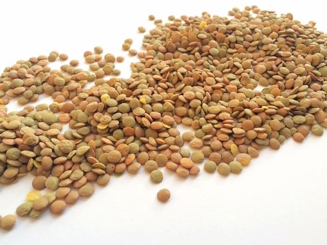 lentils dry