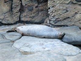 waikiki_aquarium_monk_seal