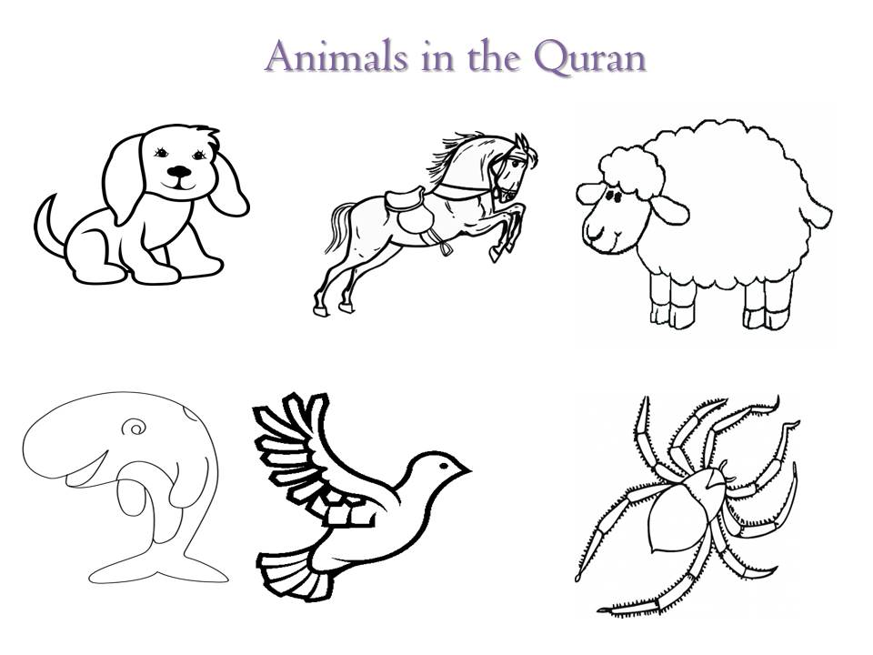 Animals in Quran (3/6)