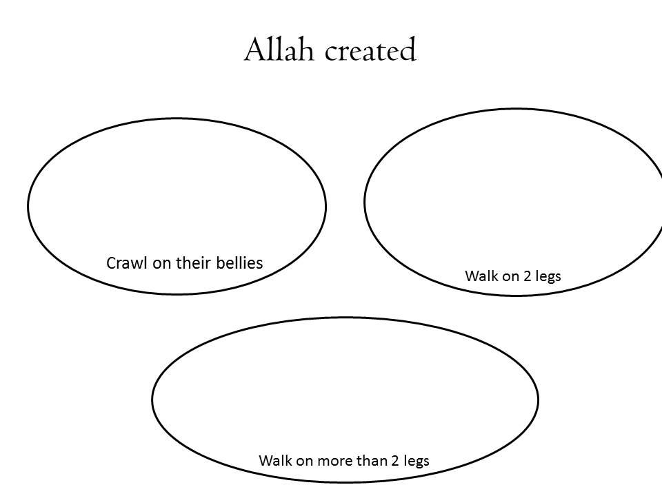 Animals in Quran (5/6)